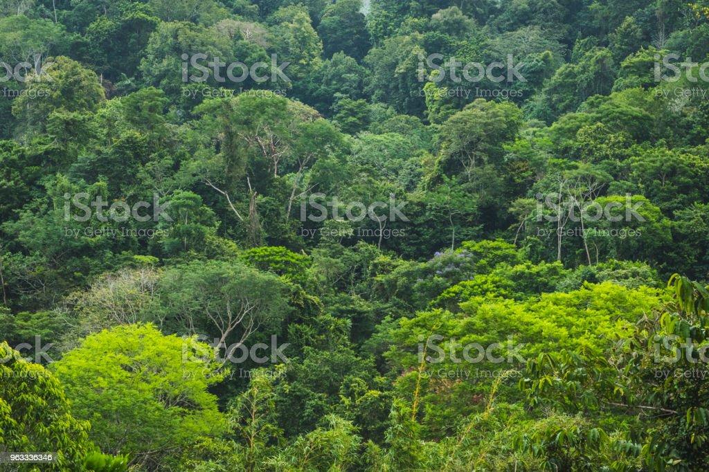 Vista aérea da floresta na floresta - vista aérea na selva - foto de acervo