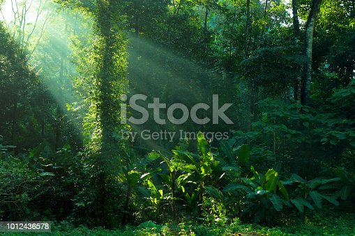 istock rainforest and sunbeam at morning 1012436578