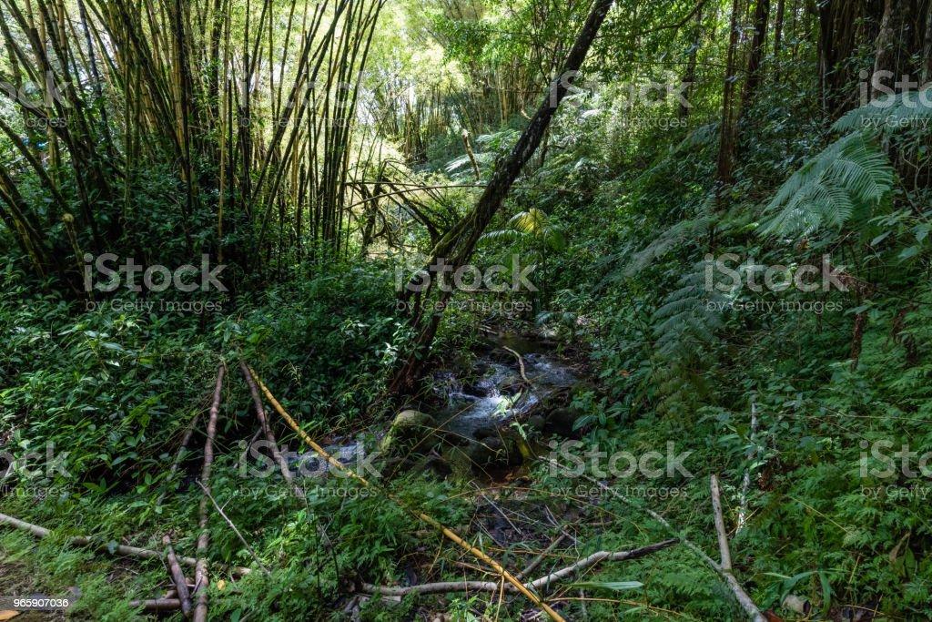 Rainforest at the Akaka Falls state park on the Big Island of Hawaii - Royalty-free Ao Ar Livre Foto de stock