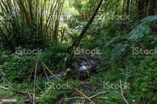 Rainforest At The Akaka Falls State Park On The Big Island Of Hawaii - Fotografias de stock e mais imagens de Ao Ar Livre