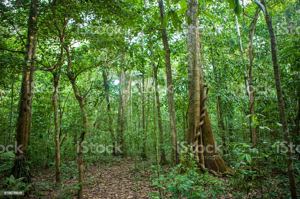 Rainforest, Bolivian Amazon stock photo