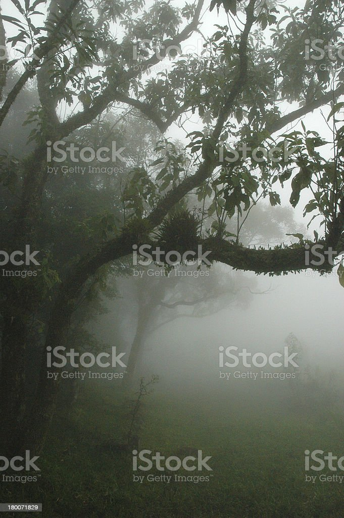 Rainforest, Brazil royalty-free stock photo