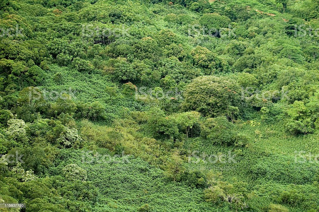 Rainforest Canopy 2 royalty-free stock photo