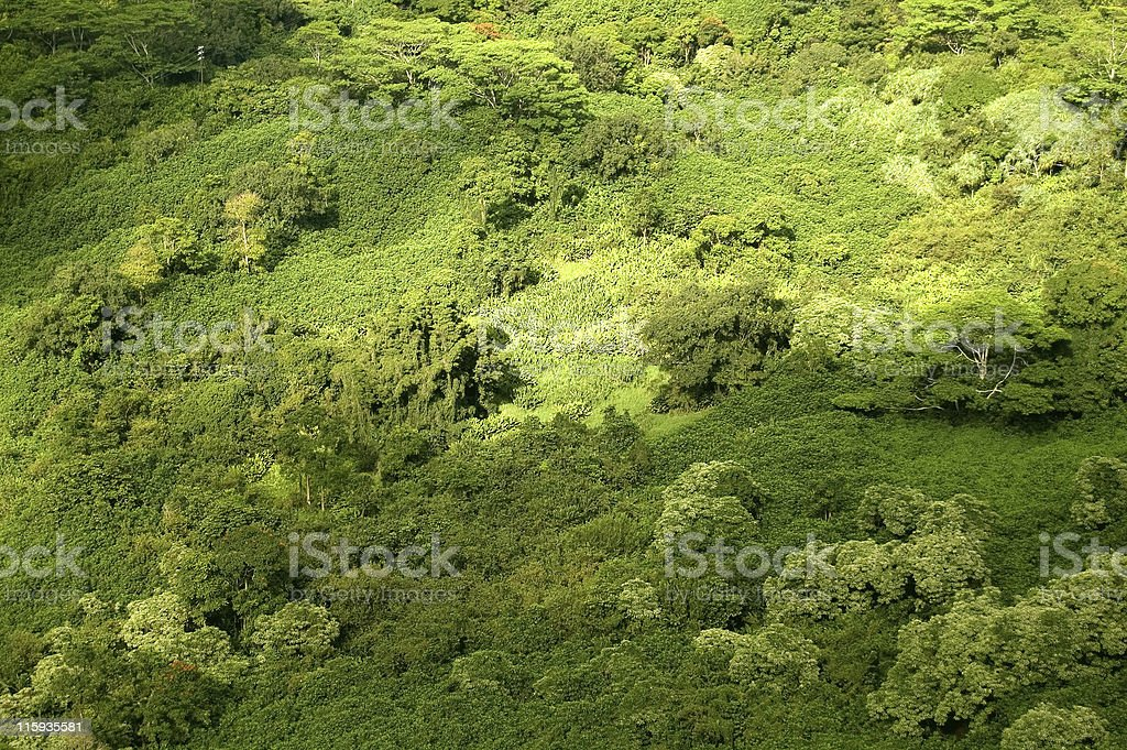 Rainforest Canopy- Aerial View royalty-free stock photo