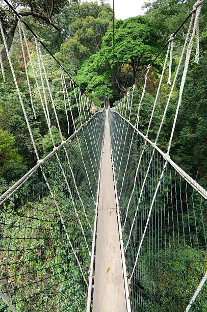 regenwald canopy walkway - baumwipfelpfad stock-fotos und bilder