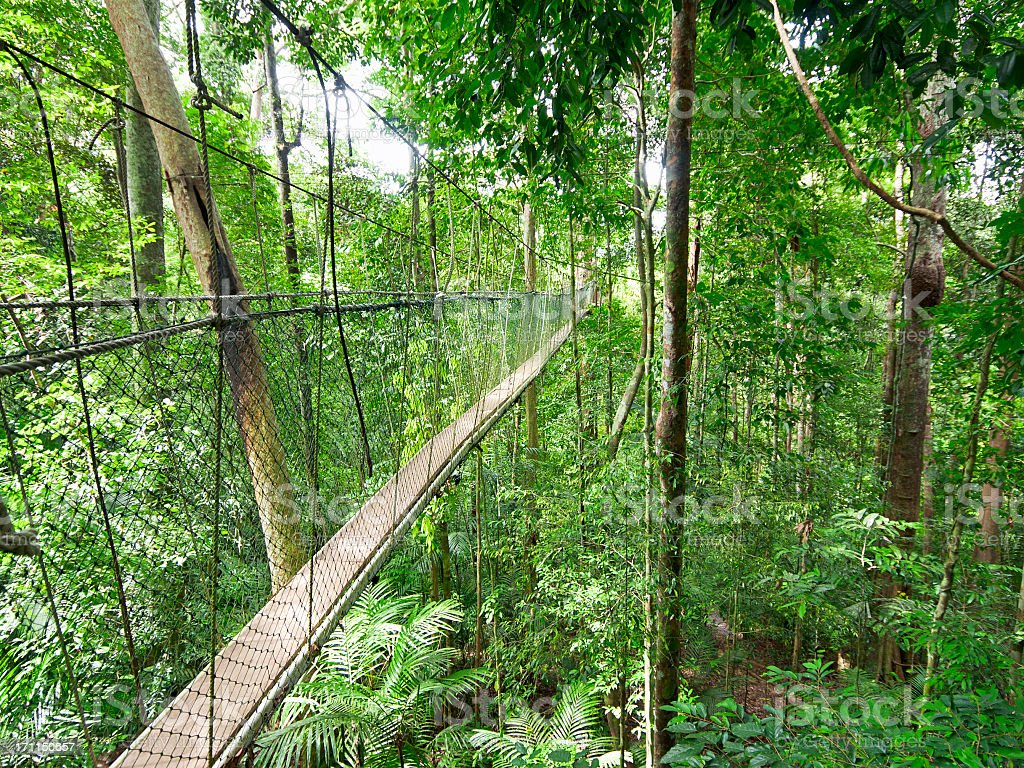Rainforest Canopy Walkway royalty-free stock photo