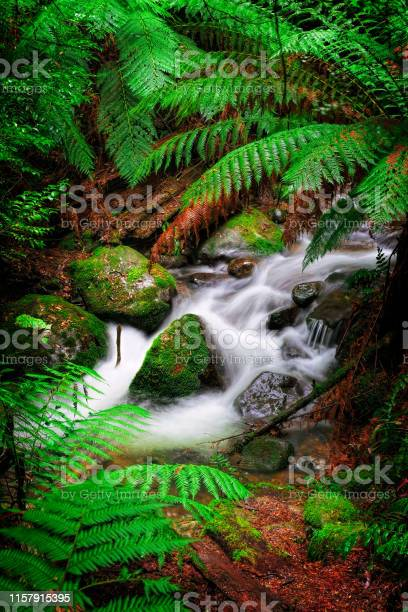 Photo of Rainforest creek