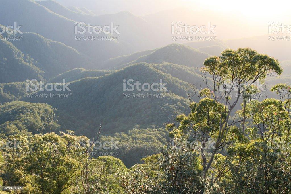 Rainforest Dawn stock photo