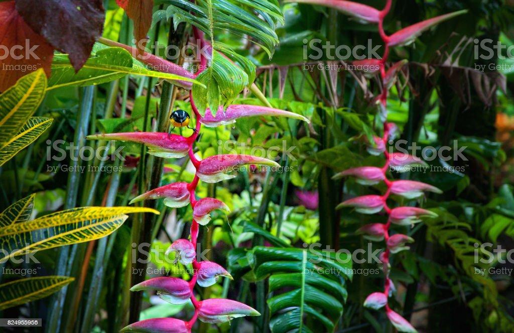 rainforest, Dominica stock photo