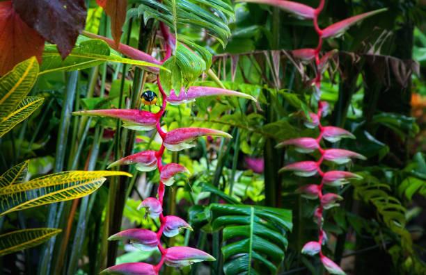 Regenwald, Dominica – Foto