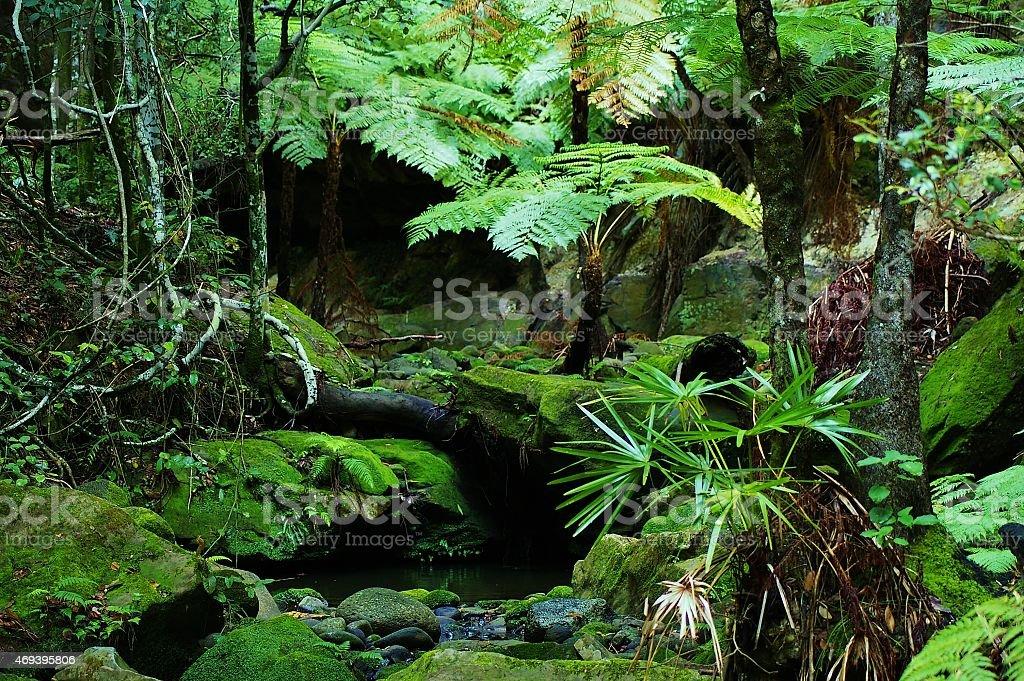 Rainforest ferns stock photo