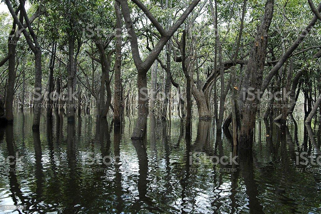 Lichtdurchfluteten Amazonas-Regenwald – Foto