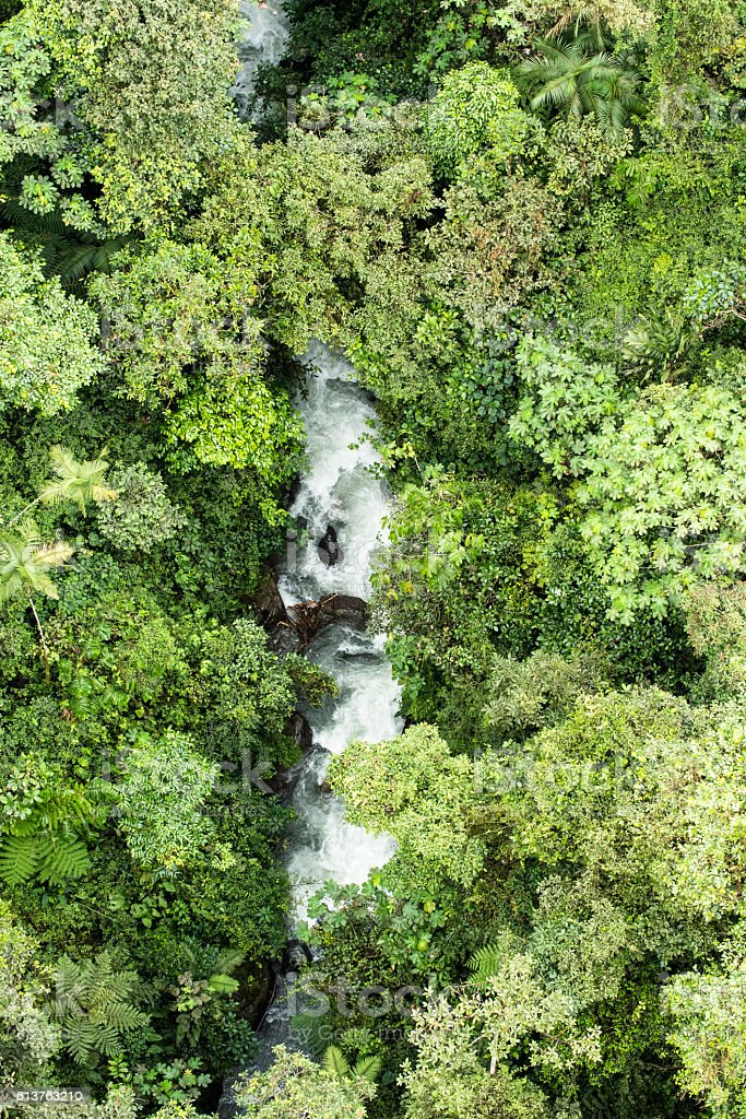 Rainforest from above perspective in Mindo Ecuador stock photo