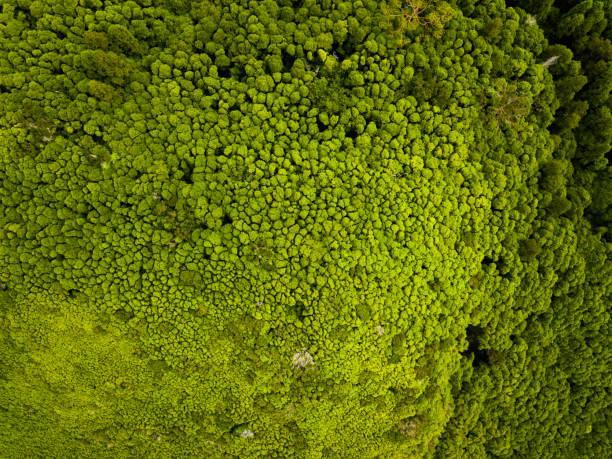 regenwald von oben - baumgruppe stock-fotos und bilder