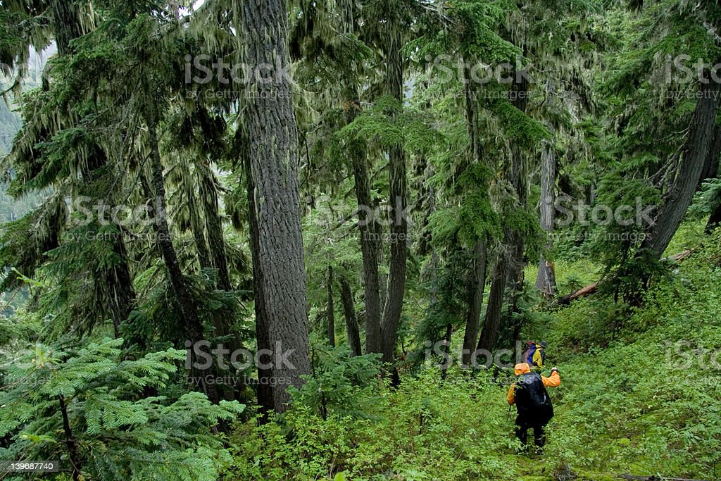 Rainforest Hike royalty-free stock photo