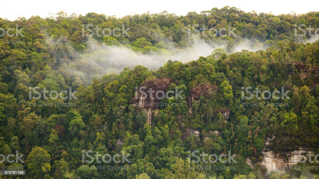 Rainforest hill view royalty-free stock photo