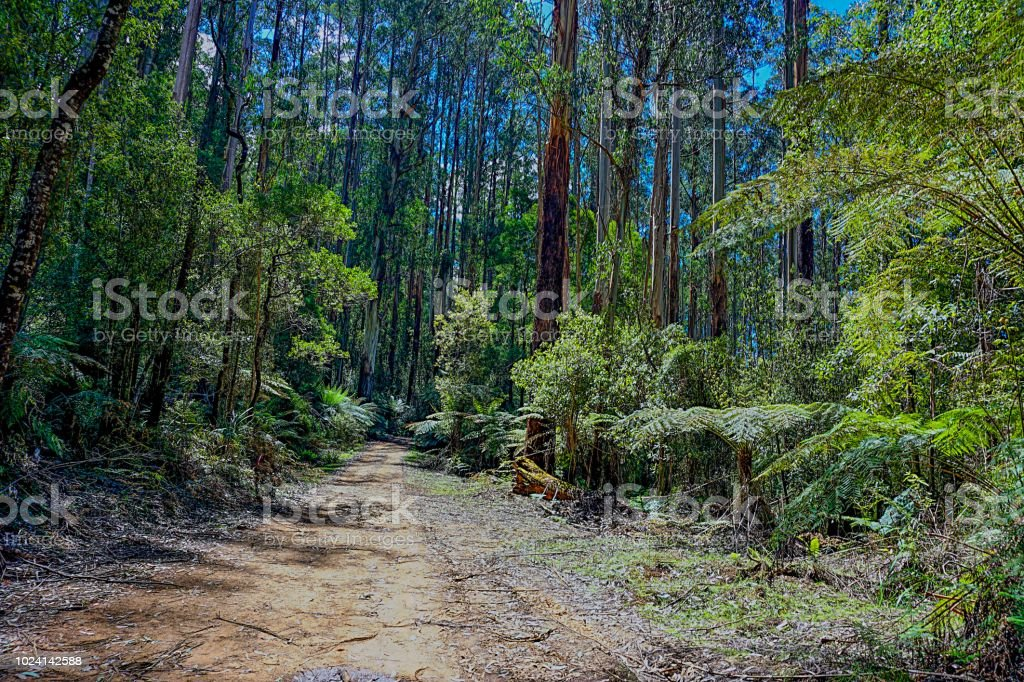 Rainforest in Australia at the yarra valley stock photo