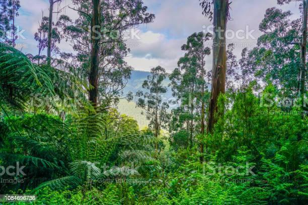 Rainforest in australia picture id1084696736?b=1&k=6&m=1084696736&s=612x612&h=zqnd 5bme ngebx3k23bpmvu2nusmwvooyid6rluoja=
