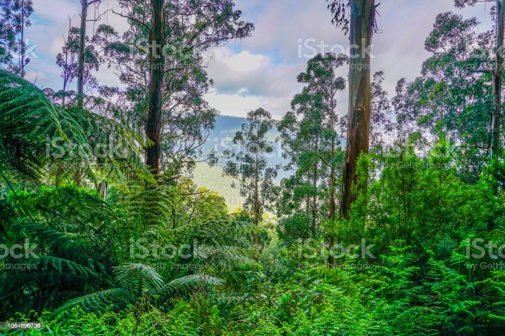 Rainforest in Australia stock photo