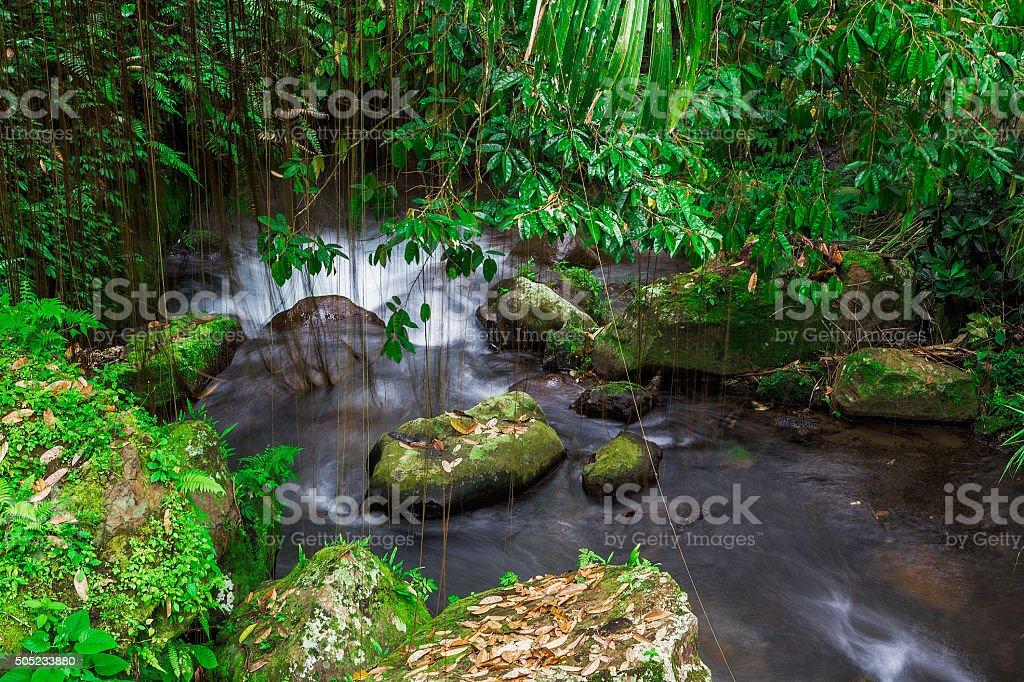 Rainforest in Bali stock photo