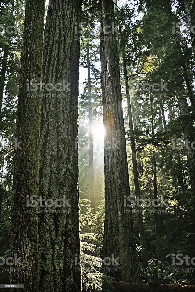Rainforest in British Columbia, Canada stock photo