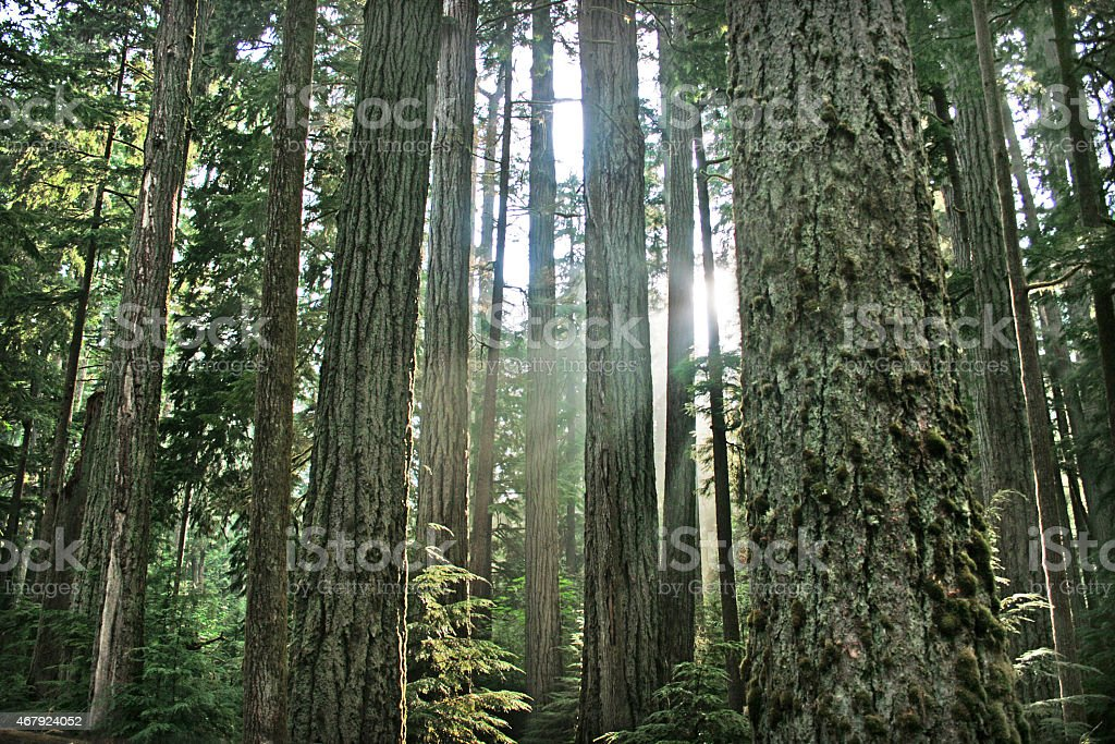 Rainforest in British Columbia, Canada stock photo