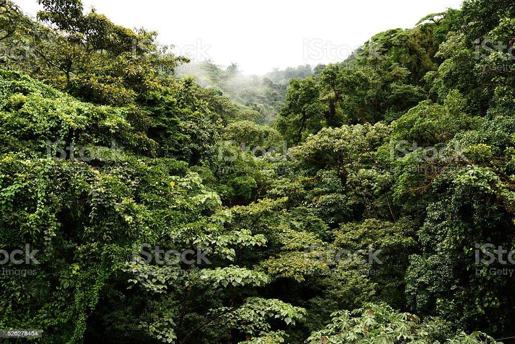 Rainforest in Costa Rica stock photo