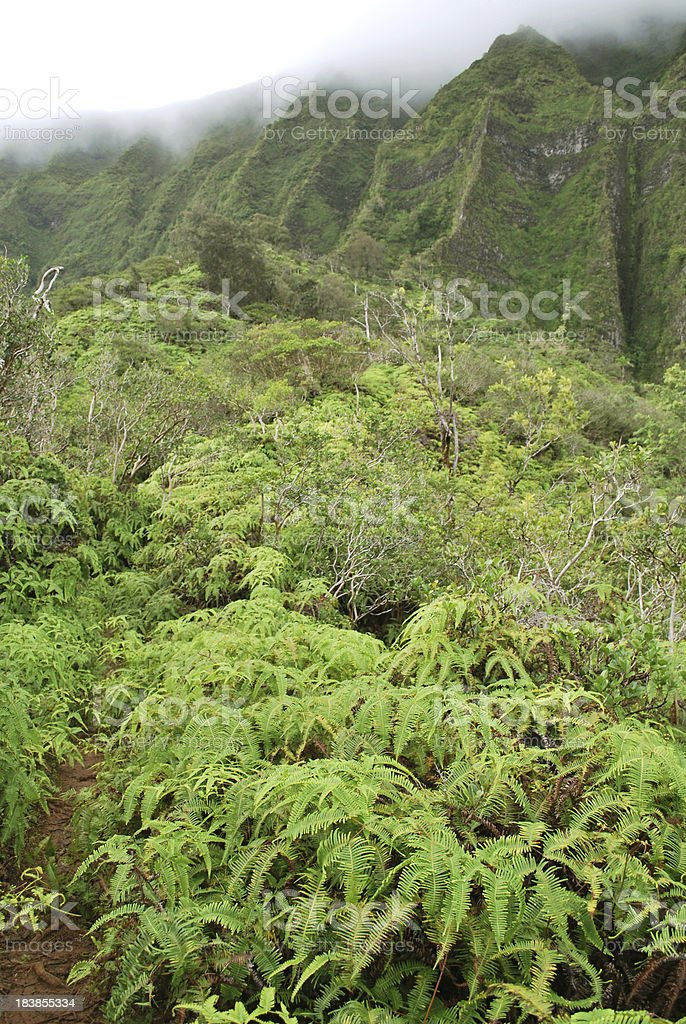 Rainforest in  Hawaii royalty-free stock photo