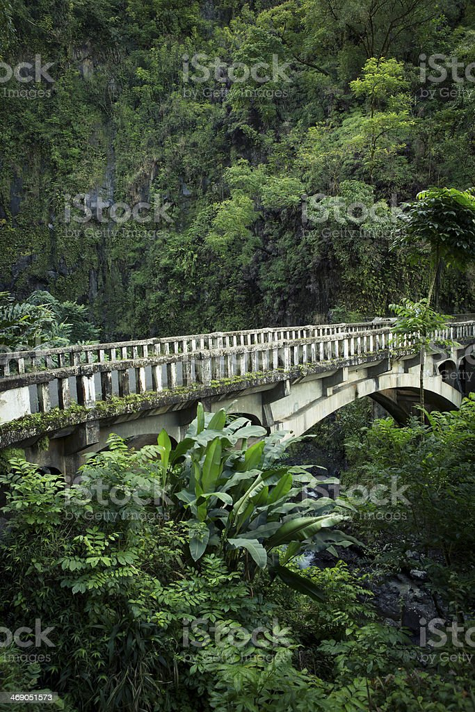 Rainforest in Maui, Hawaii. royalty-free stock photo