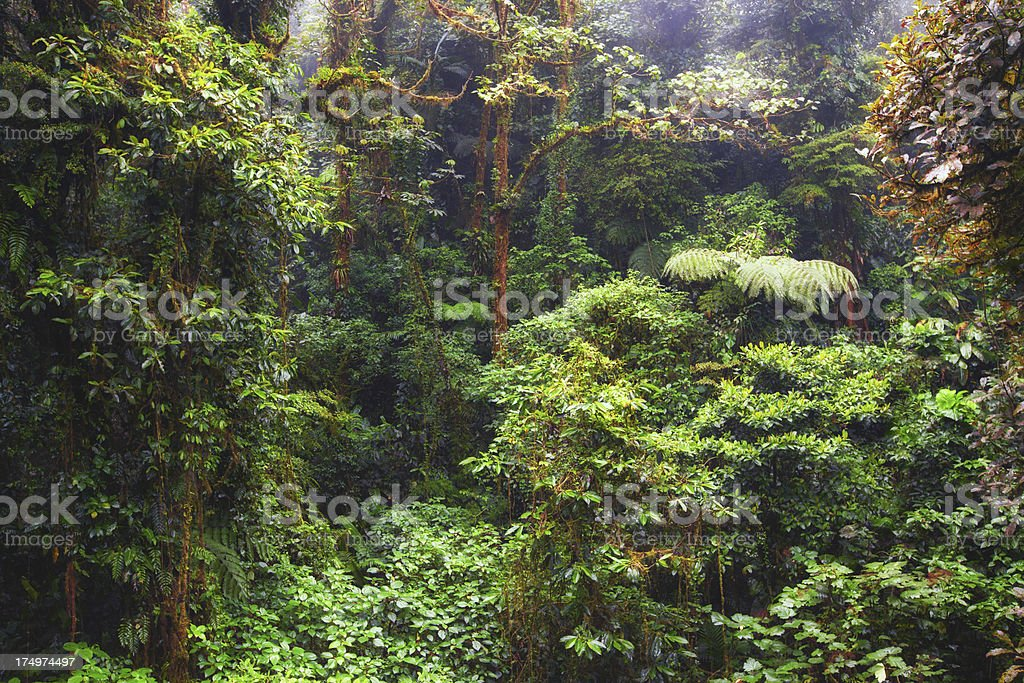Rainforest in Monteverde, Costa Rica stock photo
