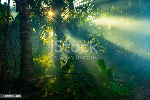 Sunrays through mist in a rainforest in Thailand.