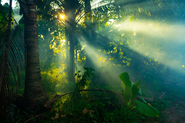 Rainforest in Thailand Sunrays through mist in a rainforest in Thailand. tropical rainforest stock pictures, royalty-free photos & images