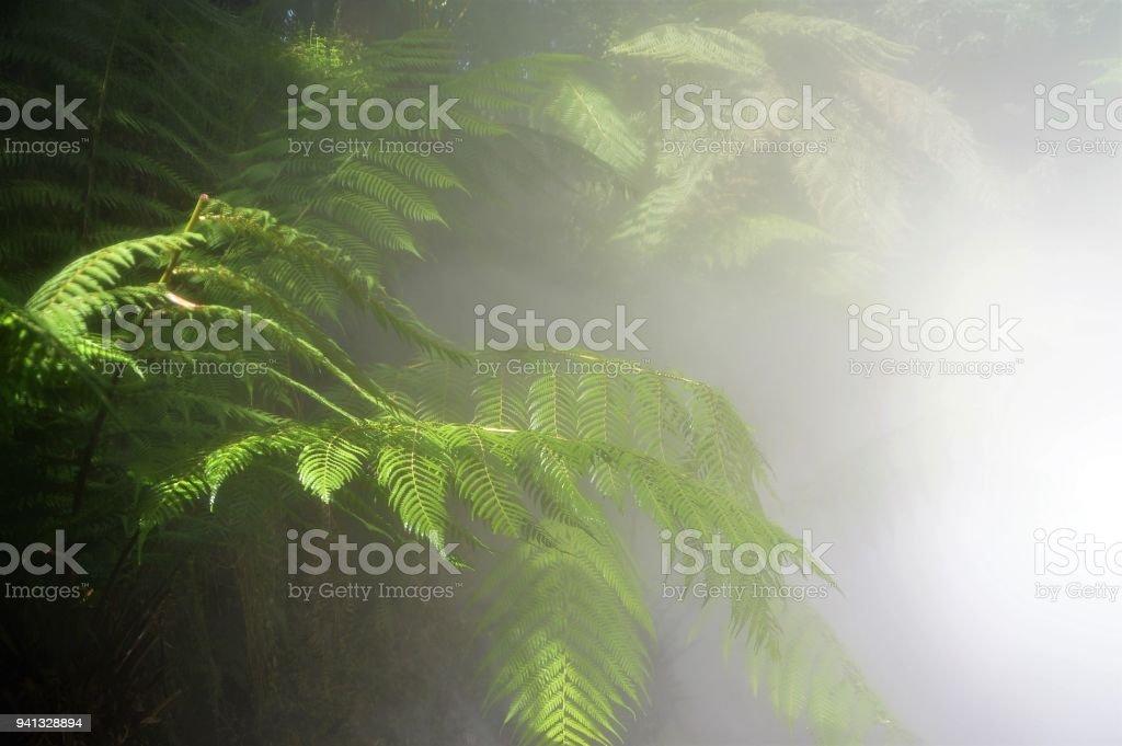 Rainforest in the mist - fern stock photo