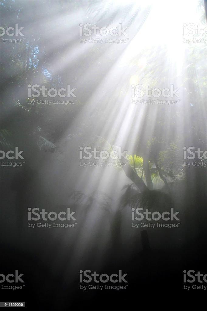 Rainforest in the mist - light stock photo