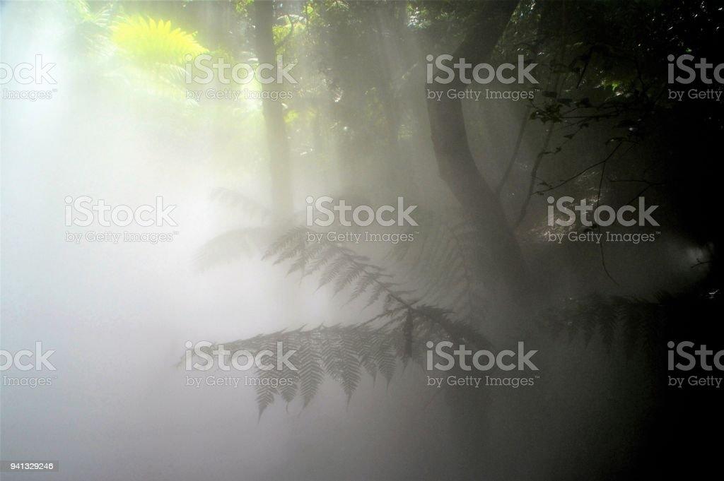 Rainforest in the mist - shadows stock photo