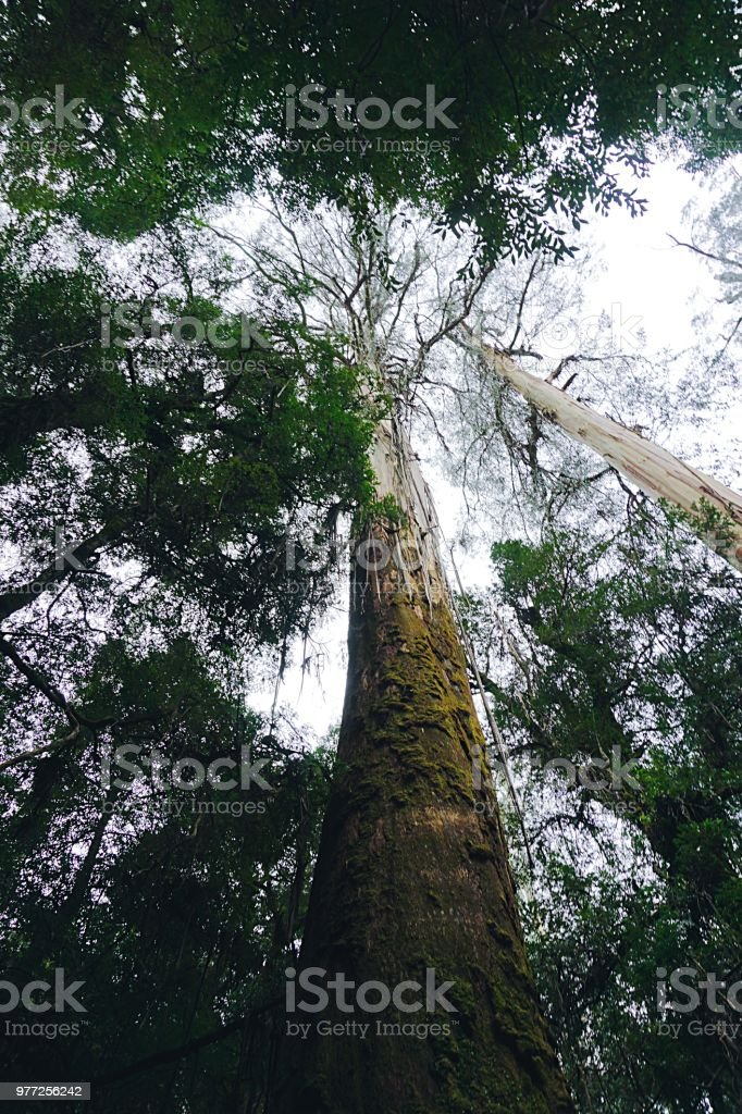 Rainforest in the Outback of Australia stock photo