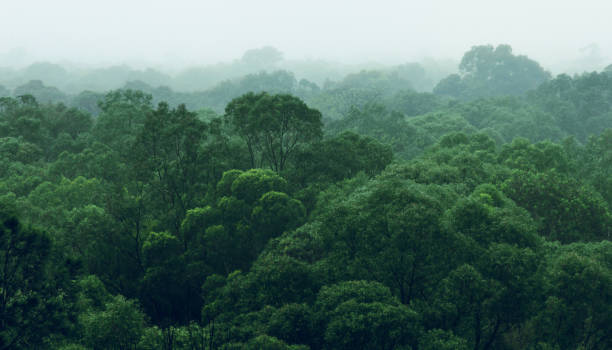 rainforest jungle aerial view - deciduous stock pictures, royalty-free photos & images