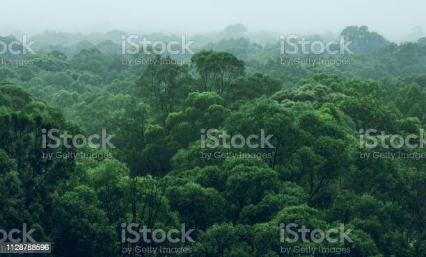 Photo of Rainforest jungle aerial view