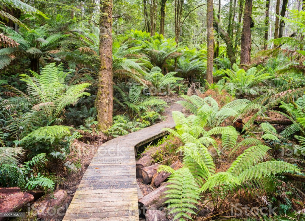 Rainforest Jungle Track, Nature Background, Rich Lush Colors stock photo