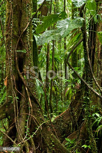 Rainforest jungle with twisted tangled vines ensnaring trees with large roots and giant leaves on the hike to Emerald Pool, UNESCO site, Dominica