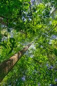 Suspension bridge in the jungles of Borneo