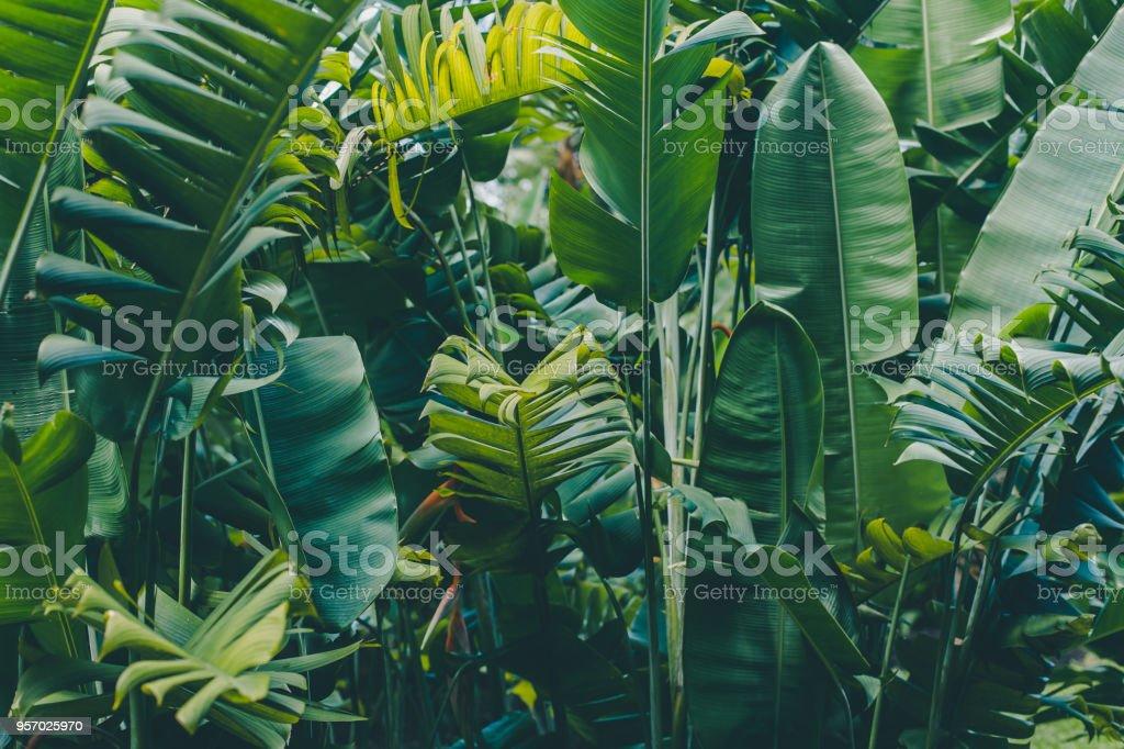 Regenwald verlässt Hintergrund – Foto