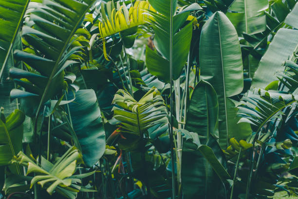 Rainforest leaves background Rainforest leaves background tropical rainforest stock pictures, royalty-free photos & images