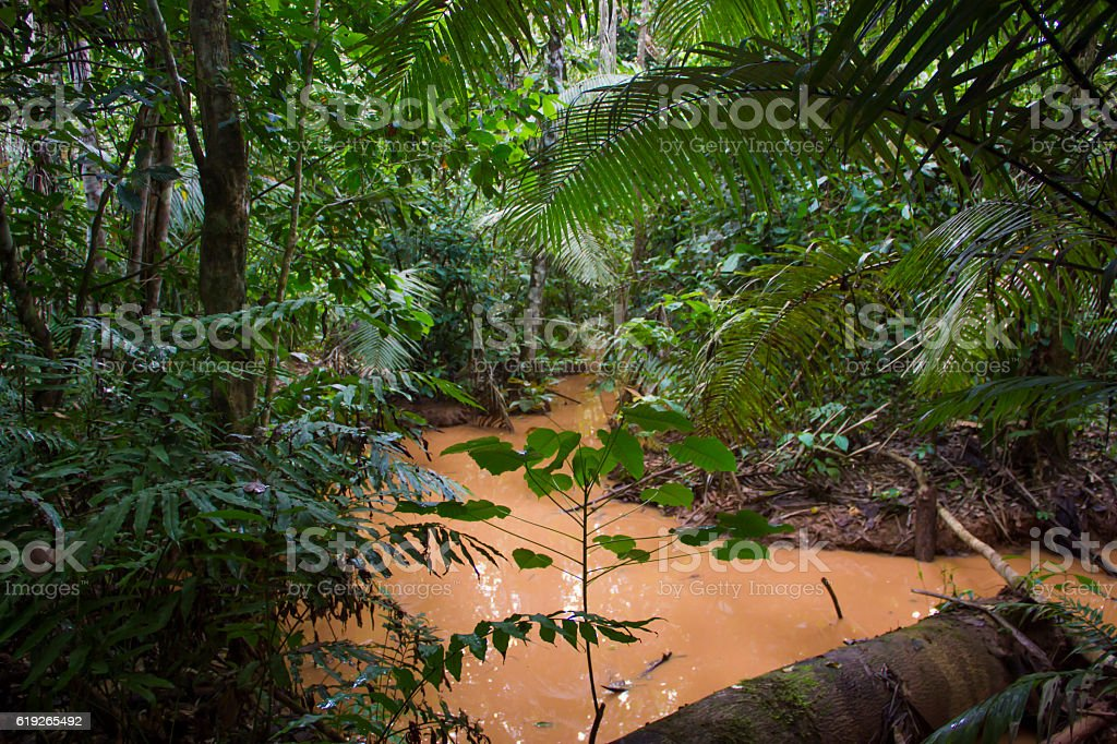 Rainforest, Madidi National Park in Bolivian Amazon stock photo