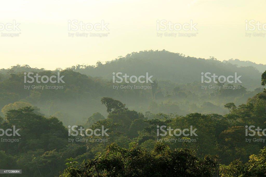 Rainforest Morning Mist bildbanksfoto