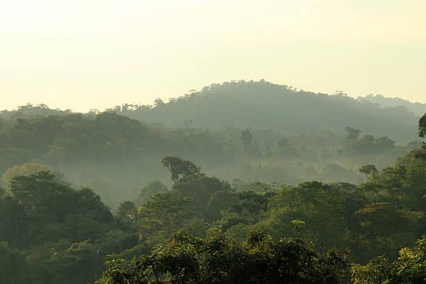 Rainforest Morning Mist stock photo