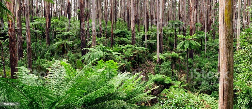Rainforest Panorama stock photo