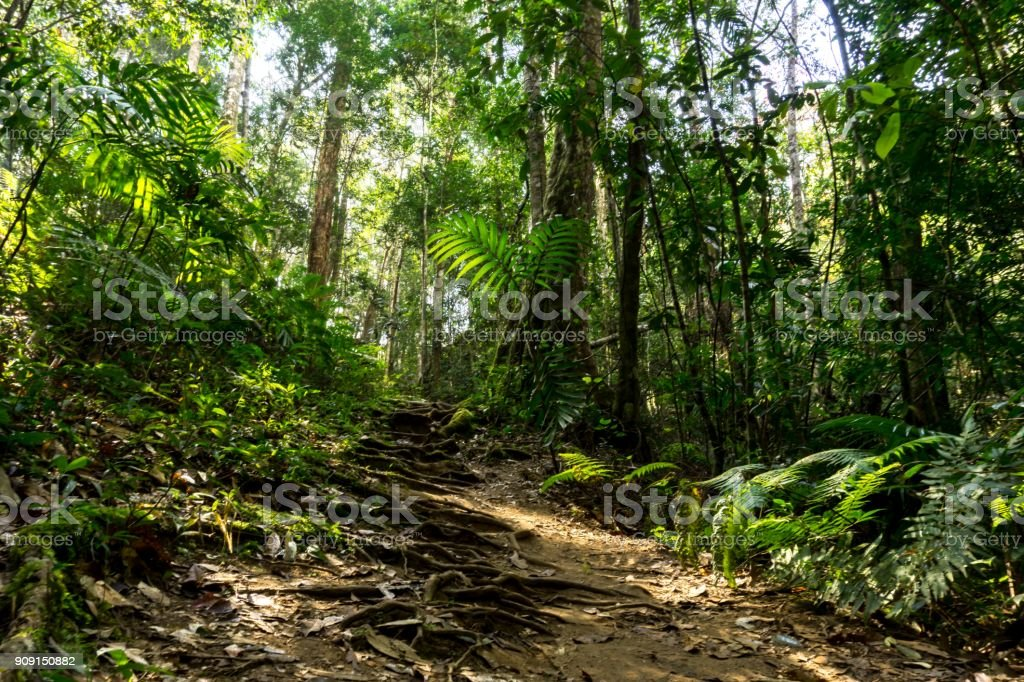 rainforest path in jungle tropical trail background stock photo