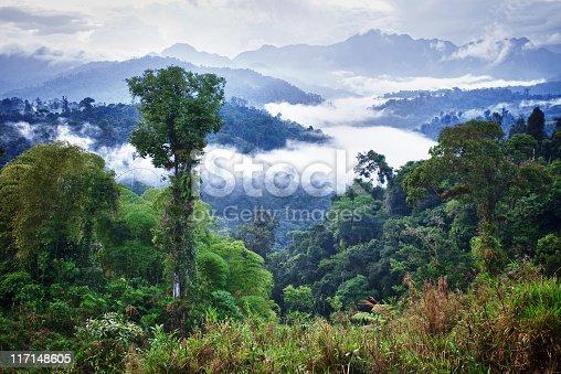 Cloudforest in Ecuador
