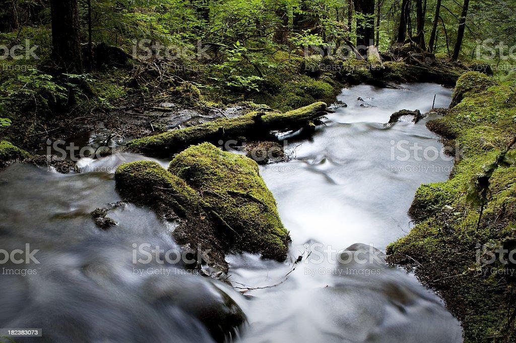 Rainforest. royalty-free stock photo